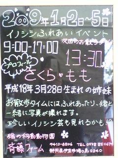 4日目(最終日)